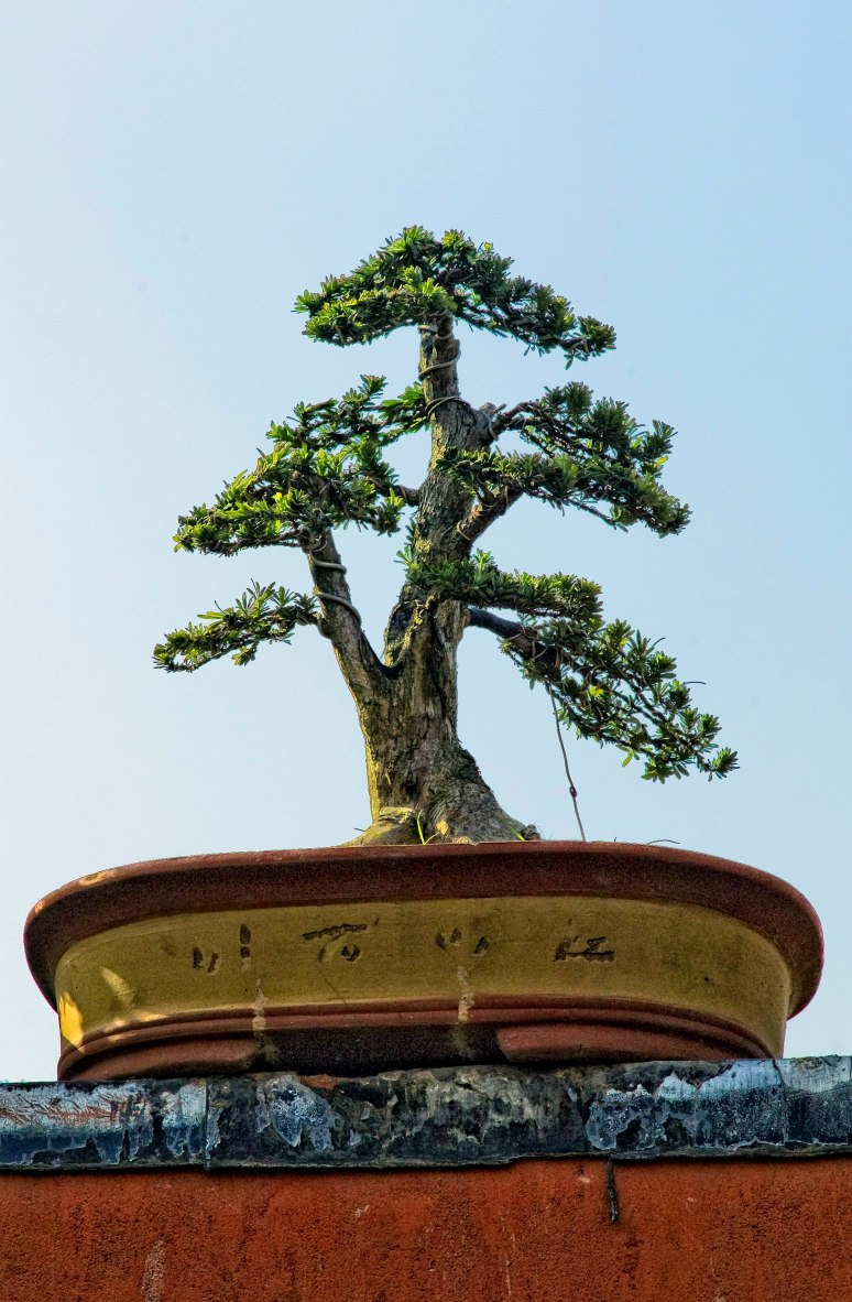 roofbonsai1