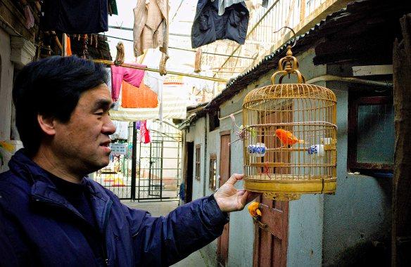 Shanghai Birdmen